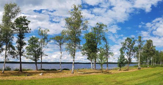 Trær ved innsjø